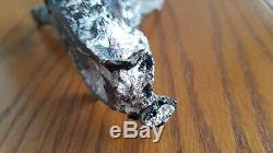 Grand Cayman Black Coral Sculpture Shark Richard Barile Marteau Signé Withcoa